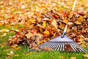 Rake Your Leaves