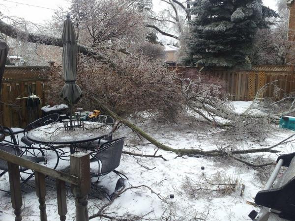 Extreme weather causes havoc in Toronto